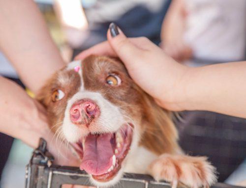 Adopta un perro despedido de su trabajo por adorable