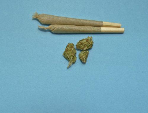 No todos aprueban la legalización de la marihuana recreativa.