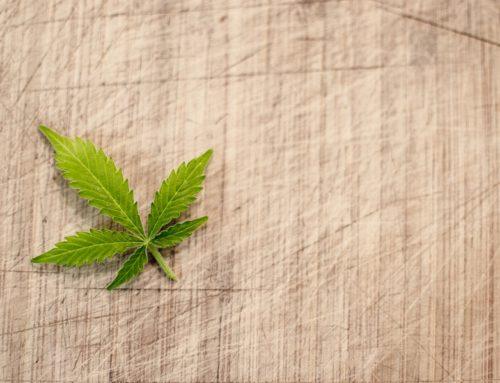 Aumento acelerado de empleo en industria de marihuana