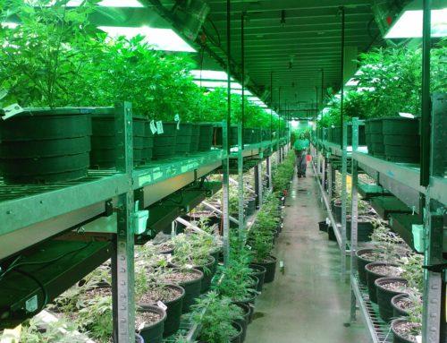 Los dispensarios también venderán marihuana recreativa