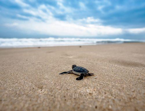 Dos semanas de hospedaje gratis a cambio de cuidar tortugas