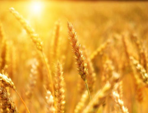 Mexico aceptó comprar más productos agrícolas para frenar los aranceles