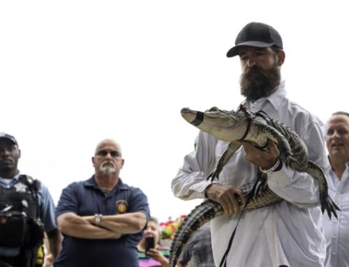 Illinois officials warn alligators don't make good pets