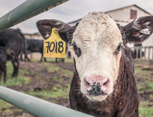 Tour para compradores extranjeros en granjas de Illinois