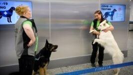 Finlandia utiliza perros detectores de COVID-19