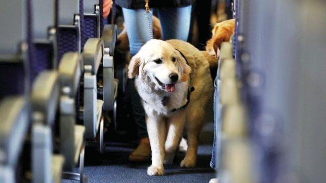Prohiben animales de apoyo emocional en los aviones